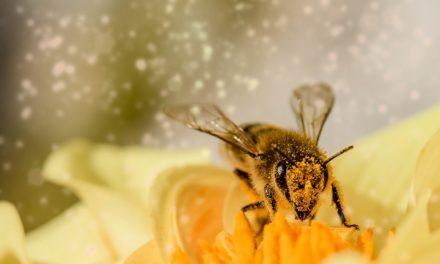Bienen unter der Lupe