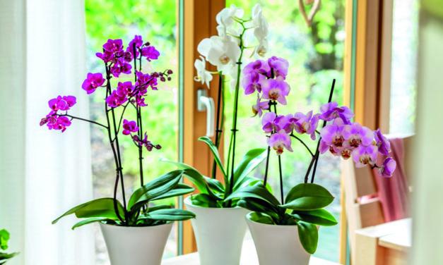 """<span class=""""entry-title-primary"""">Farbenpracht in dunkler Jahreszeit</span> <span class=""""entry-subtitle"""">Orchideen richtig pflegen</span>"""