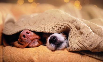 Viele Hunde haben Angst vor Silvester
