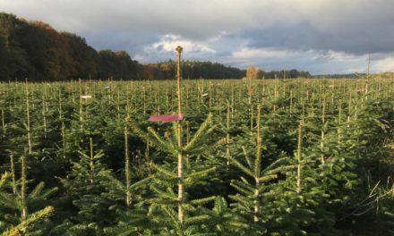 """<span class=""""entry-title-primary"""">""""Plastikfasten"""", gerade auch zu Weihnachten</span> <span class=""""entry-subtitle"""">Verbraucher können beim Kauf des Weihnachtsbaumes viel für den Klima- und Umweltschutz tun</span>"""