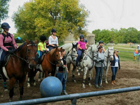 Mein Verein … bietet Reitern und Pferden eine Heimat