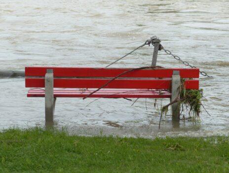 Schwemmgut in den Grünanlagen am Rheinufer