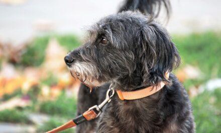 Anleinpflicht für Hunde im Ostpark
