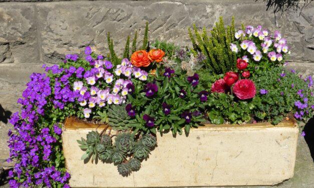 Blumenkübelpaten in Alt-Kostheim erhalten Zuschuss des Ortsbeirates