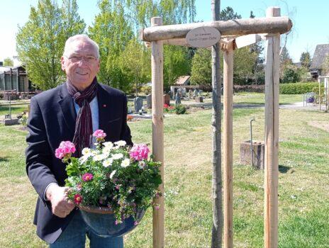 Eiche auf dem Friedhof Bauschheim für Horst Trapp