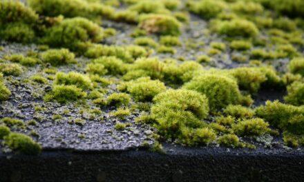 Die Grillhütte erhält ein neues Gründach