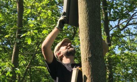 Fledermausschutz: 40 zusätzliche Quartiere als Ausgleichsmaßnahme für Krämereck-Süd
