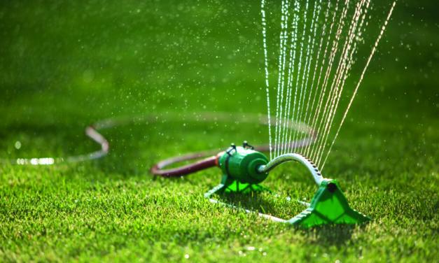 Rasen im Sommer richtig wässern