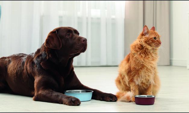 Haustiere richtig versichern