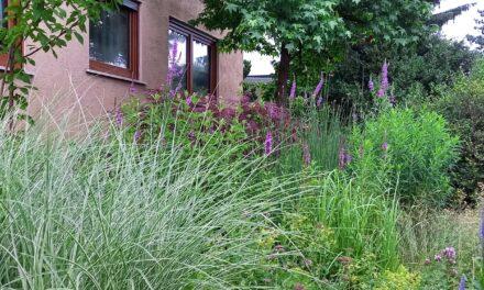 Mit Wettbewerb zu blühenden Vorgärten