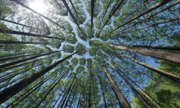 Flörsheimer Wald wird gefördert