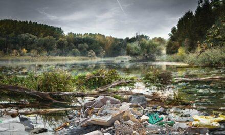 1. Main CleanUp in Hochheim am Main