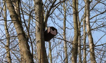 Artenvielfalt erhalten: Stadt montiert Vogelnisthöhlen am Schwarzbach