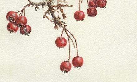"""Ausstellung """"Pflanzenwelten III"""" im Kunstforum Mainturm"""