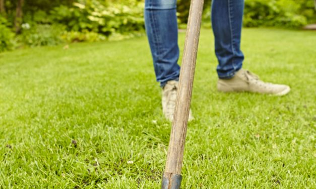 """<span class=""""entry-title-primary"""">Schritt für Schritt zum grünen Rasen</span> <span class=""""entry-subtitle"""">Vertikutieren als Startprojekt für die neue Gartensaison</span>"""