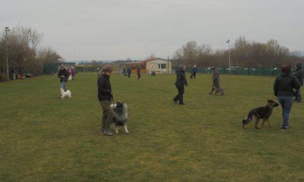 Workshop Basistraining für Hunde aller Rassen