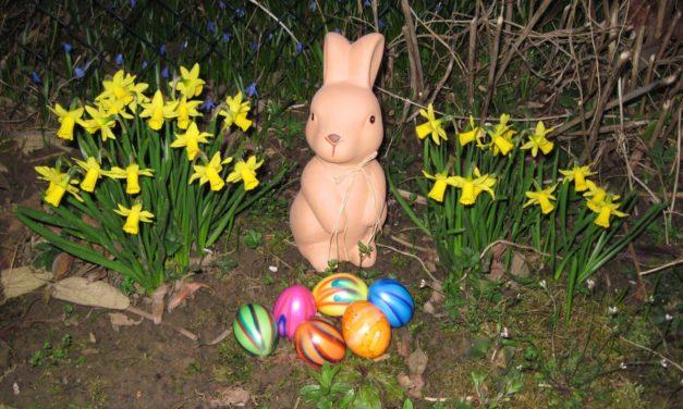 """<span class=""""entry-title-primary"""">Wieso kommt an Ostern ein Hase und weshalb gibt es Eier?</span> <span class=""""entry-subtitle"""">Ein kleiner Rückblick in der Ostergeschichte</span>"""