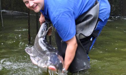 """<span class=""""entry-title-primary"""">Rheinhessen-Fisch GmbH liefert Fisch frisch aus dem Quellwasser</span> <span class=""""entry-subtitle"""">….. Fisch kauft man dort, wo er schwimmt</span>"""